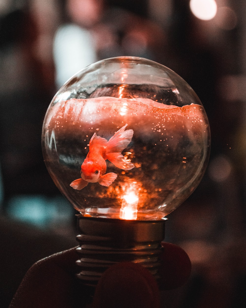 goldfish in glass bowl