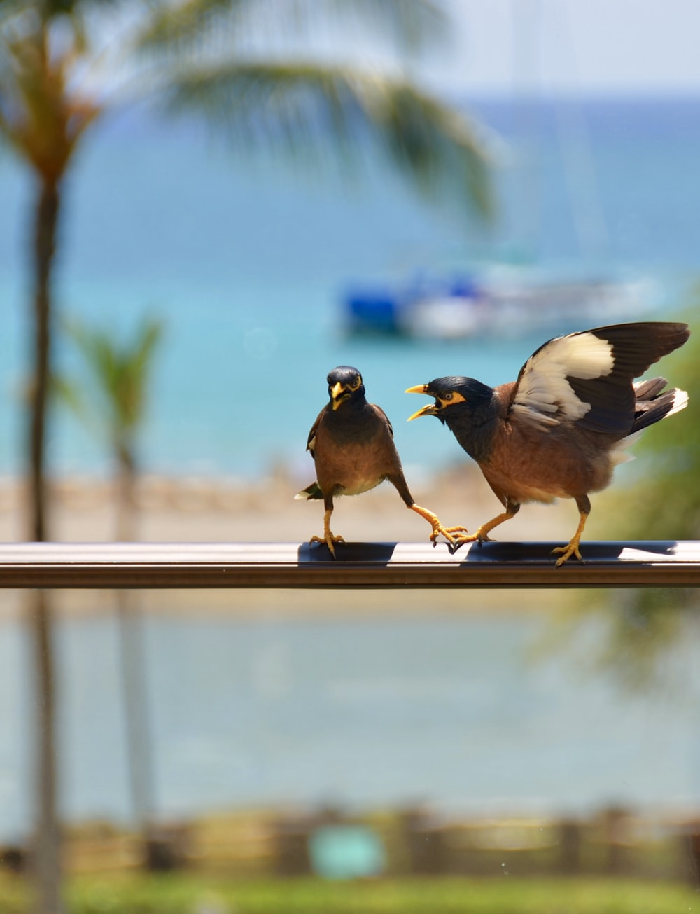 shallow focus photography of two brown birds