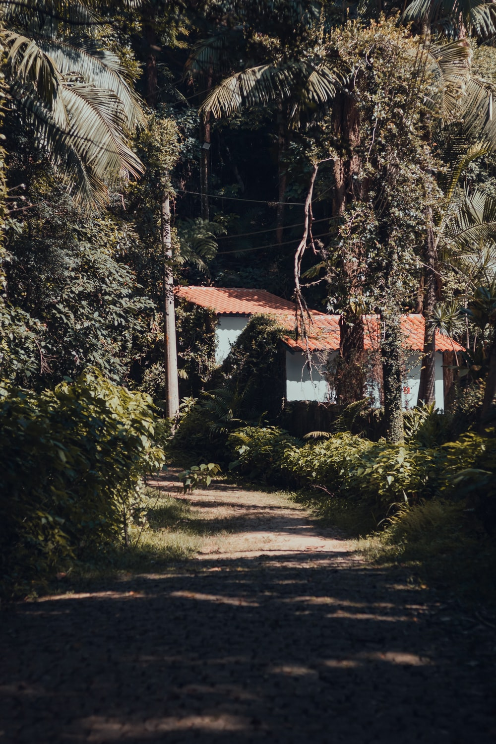house surrounded by trees