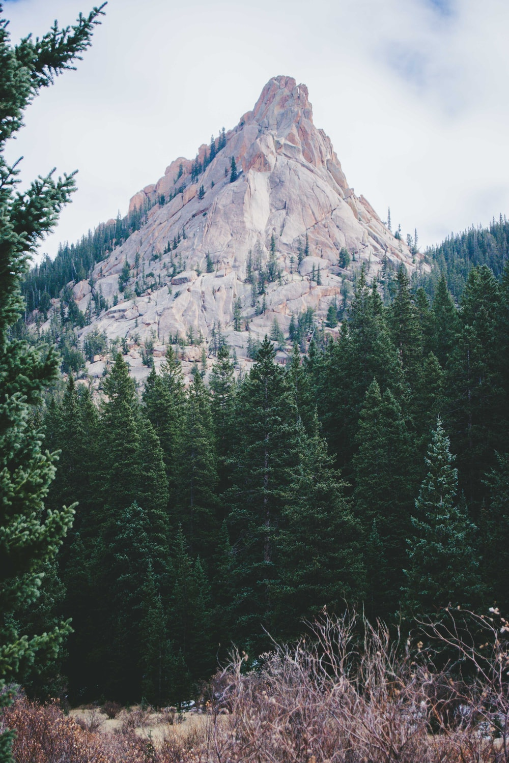 photography of mountain range and green pine trees during daytime