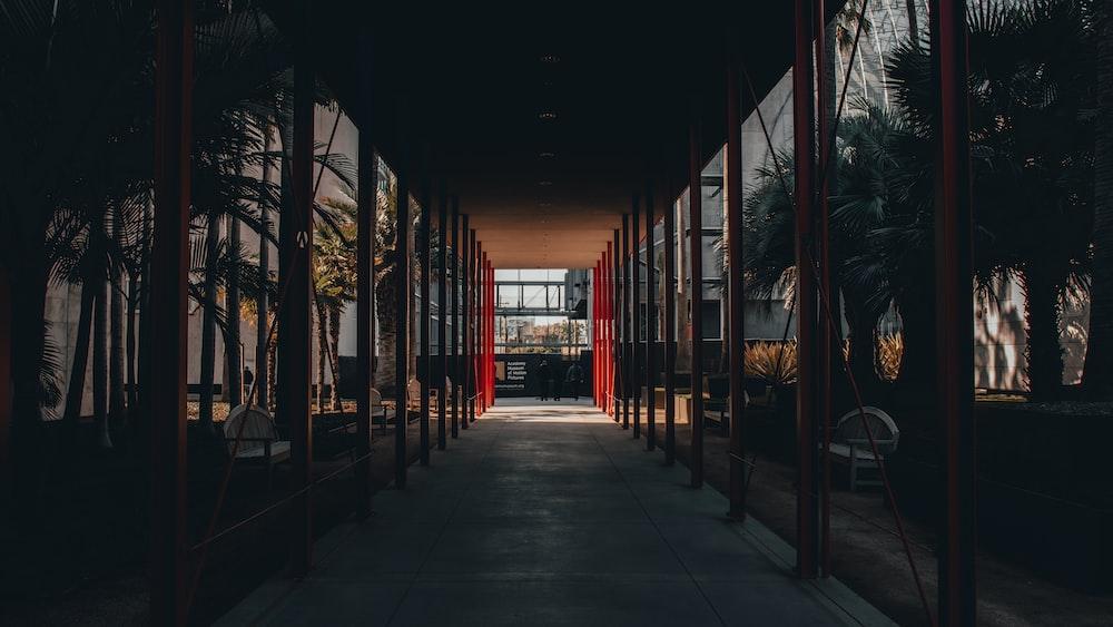palm plants beside hallway
