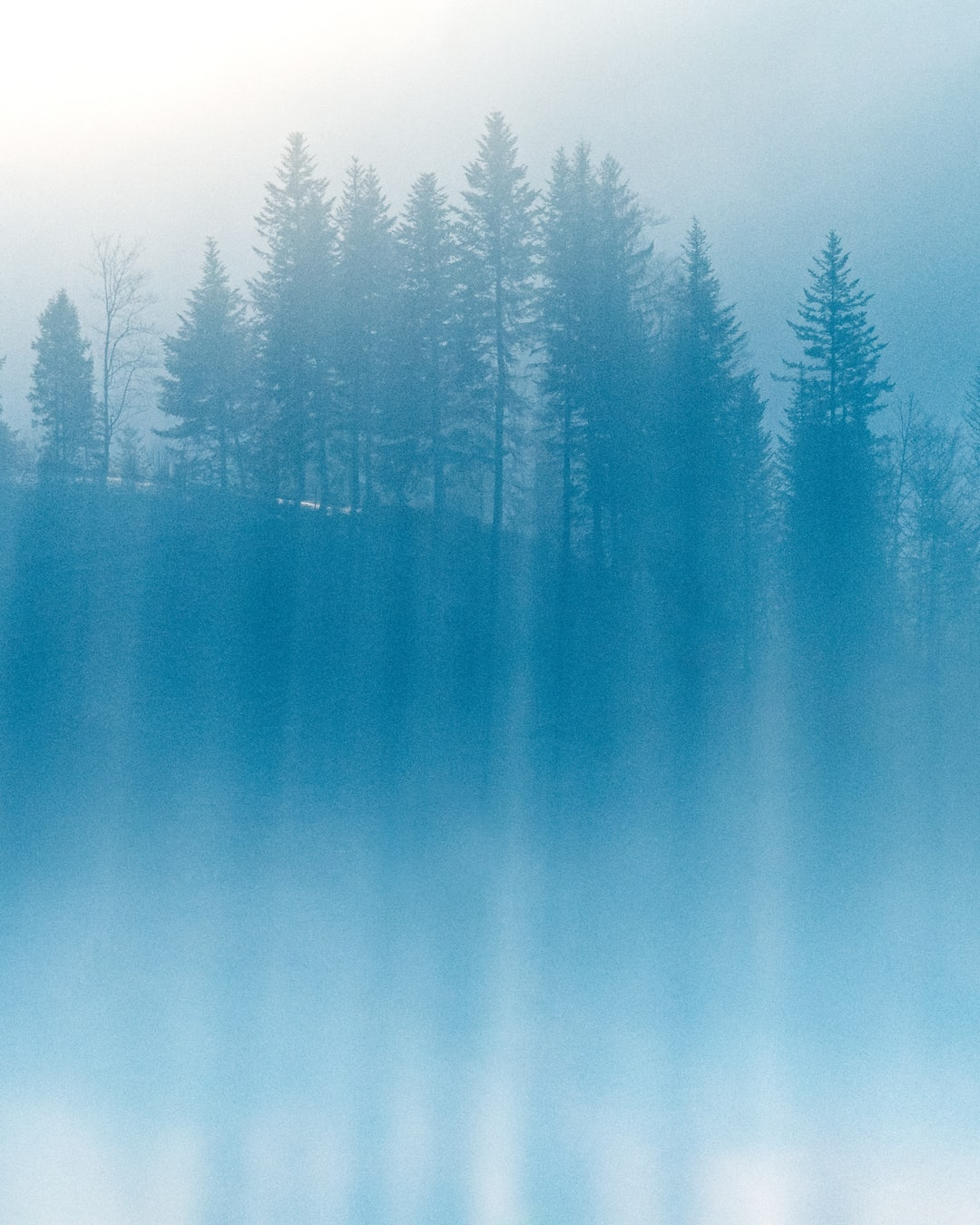 minimal, moody, misty forest with fog in the early morning