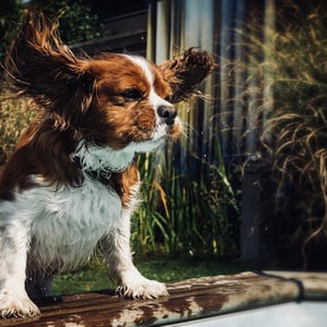 white and brown dog beside plants