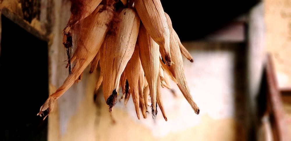 brown corns