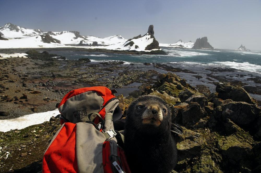 sea lion on rock near sea