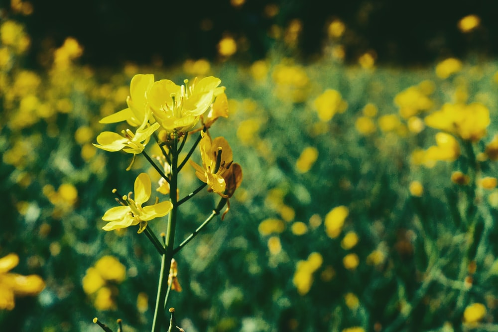 selective focus photo of yellow-petaled flowers