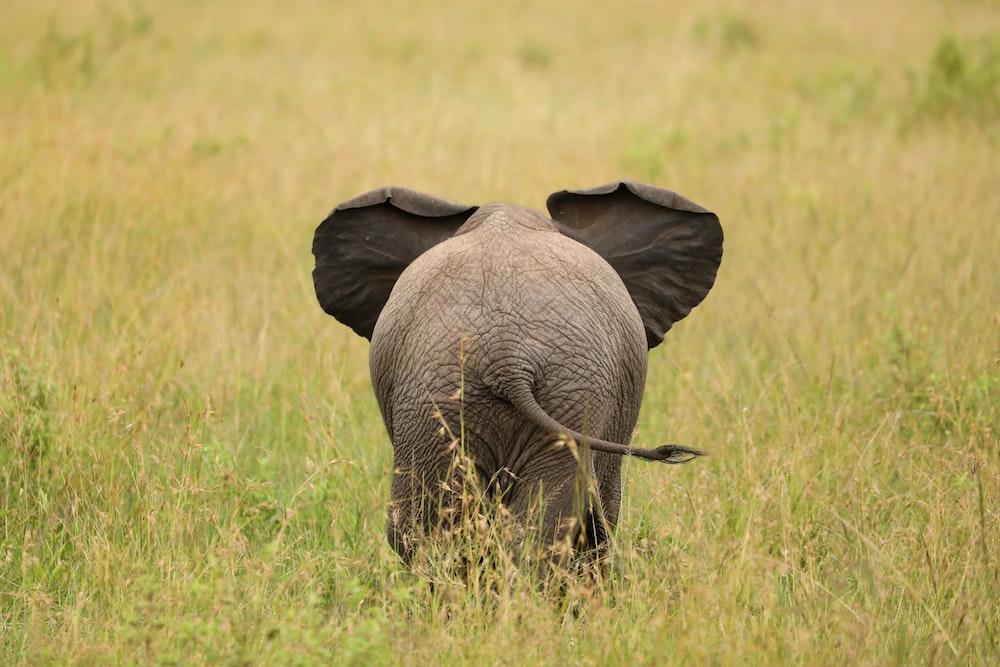 elephant standing on green field
