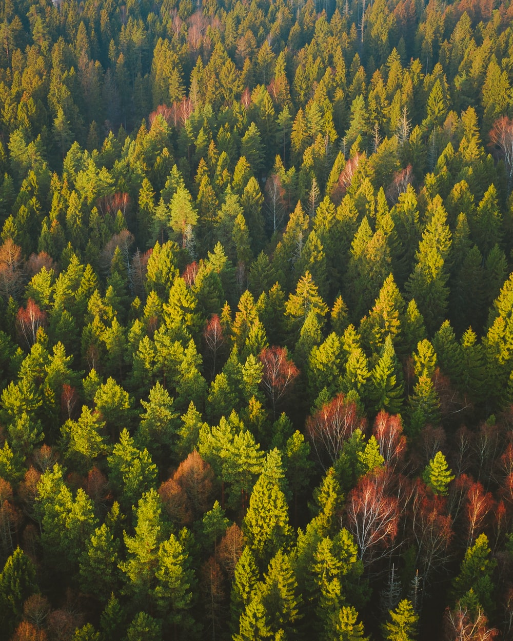 aerial photograph of trees