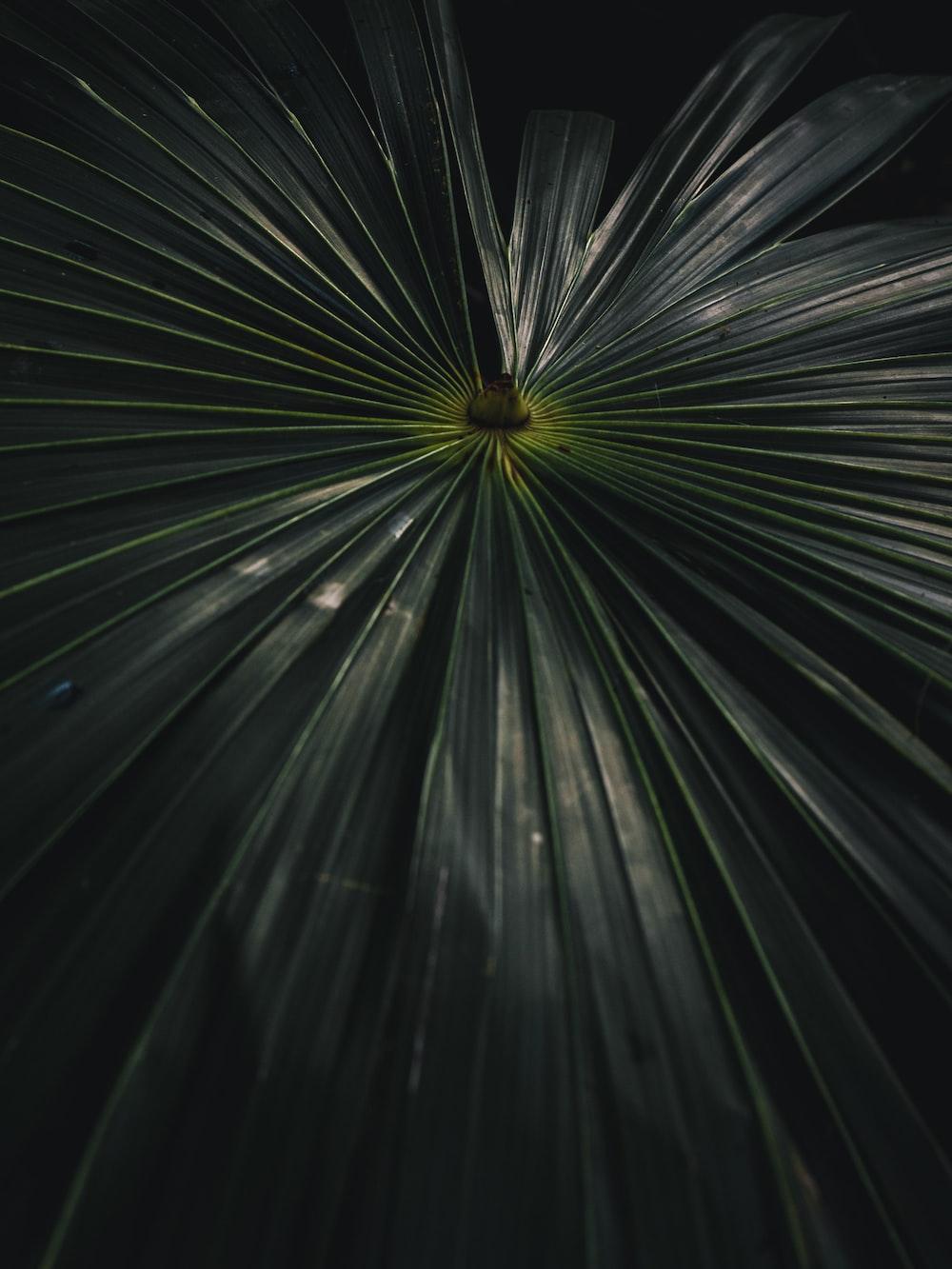 green palm plant leaf