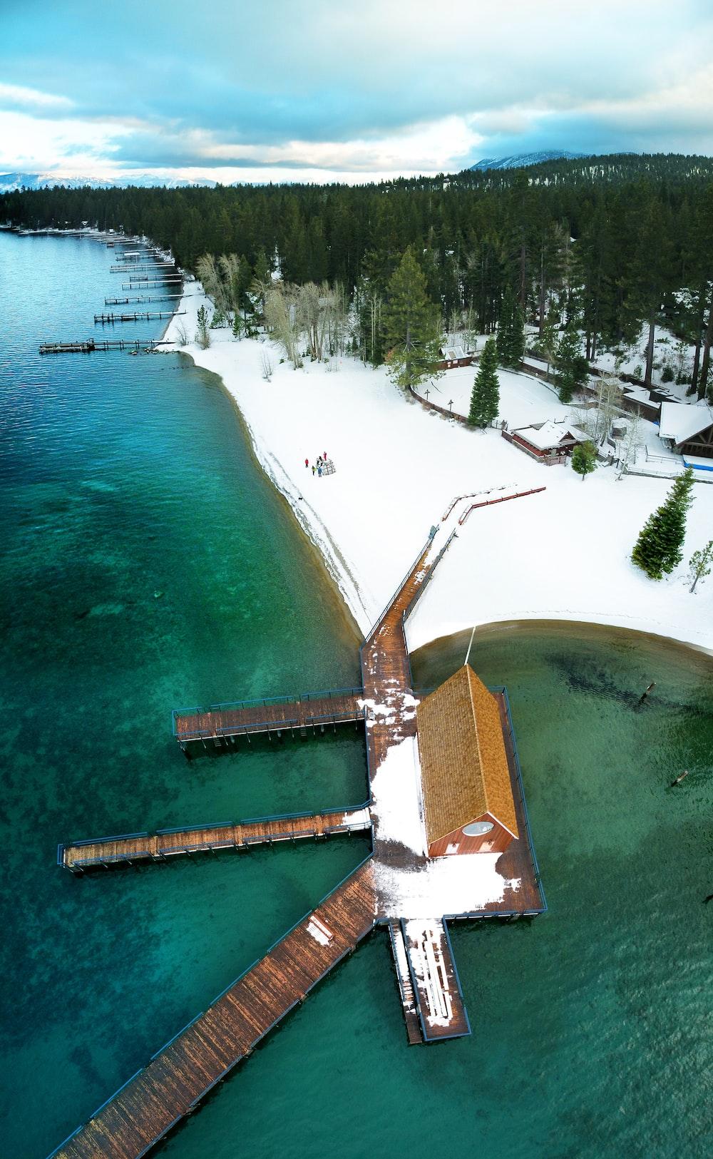 wooden dock near trees