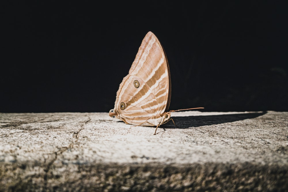 brown and white butterfly on gray surface