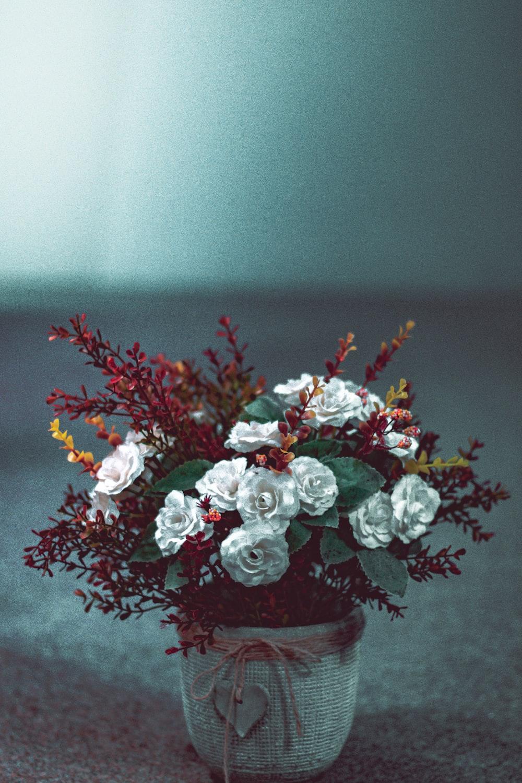 white-petaled flowers