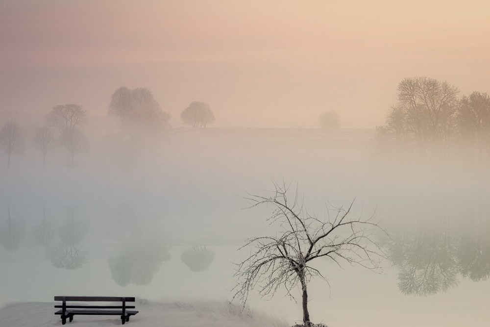 bare tree beside empty bench during daytime