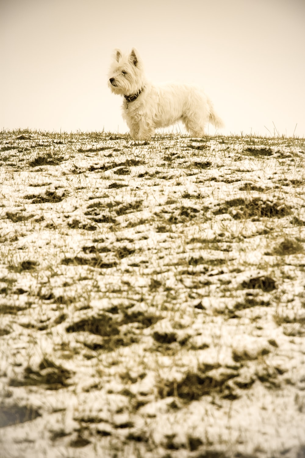 white dog standing on snow-covered ground