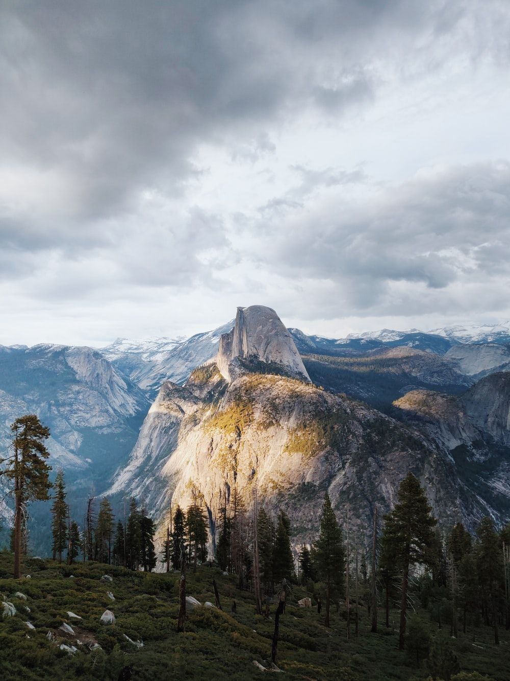 trees on mountain
