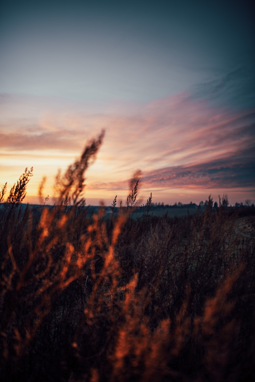plants during golden hour