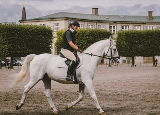 equestrian on field near building at daytime