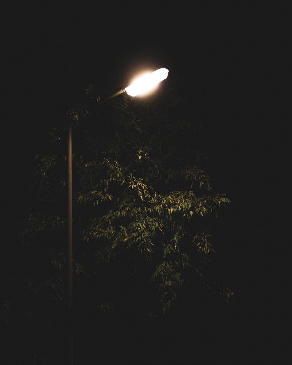 turned-on post lamp beside tree