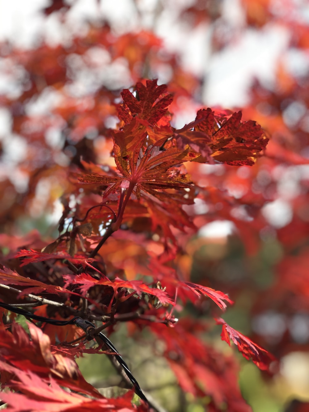 branch of red leaves