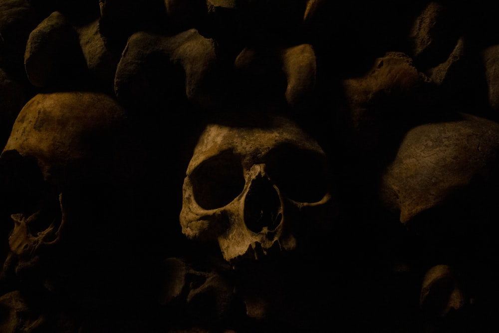 macro photography of brown human skulls