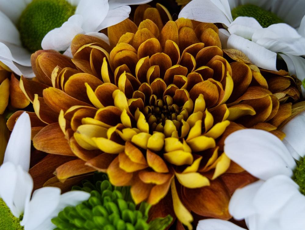 yellow petaled flower photograph
