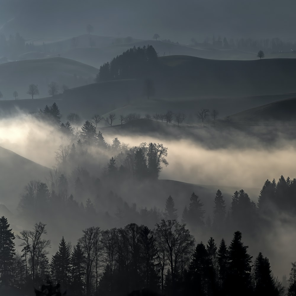 trees and hills with fog