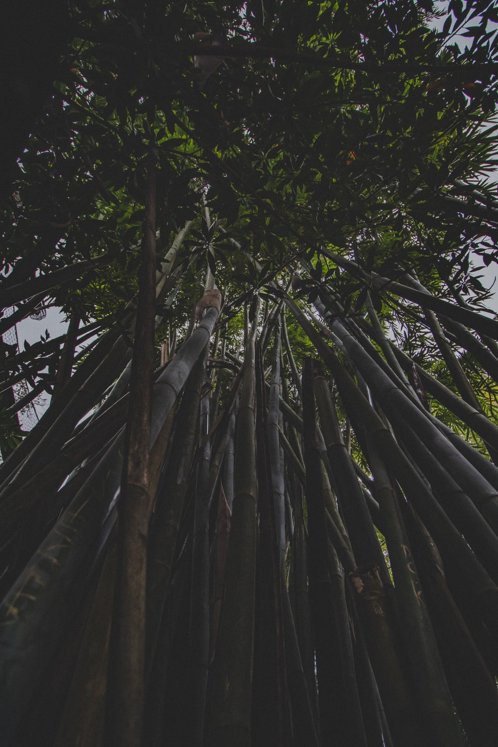 low-angle photography of bamboo