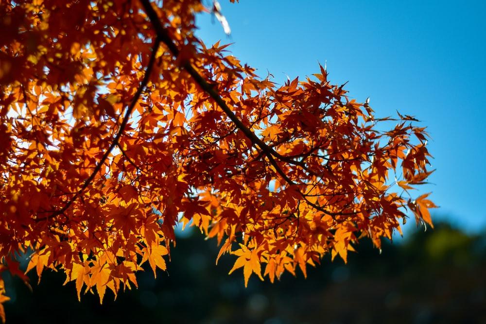 orange-leafed tree under a calm blue sky