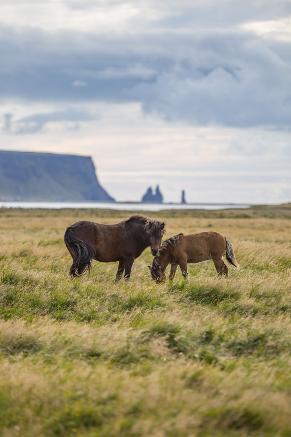 two brown horses in grass field