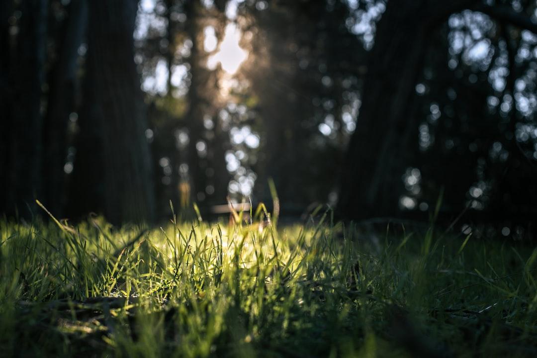Sunlight Streaming Through A Eucalyptus Grove - unsplash