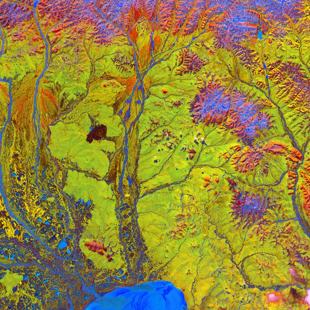 macro photography of yellow and multicolored abstract art