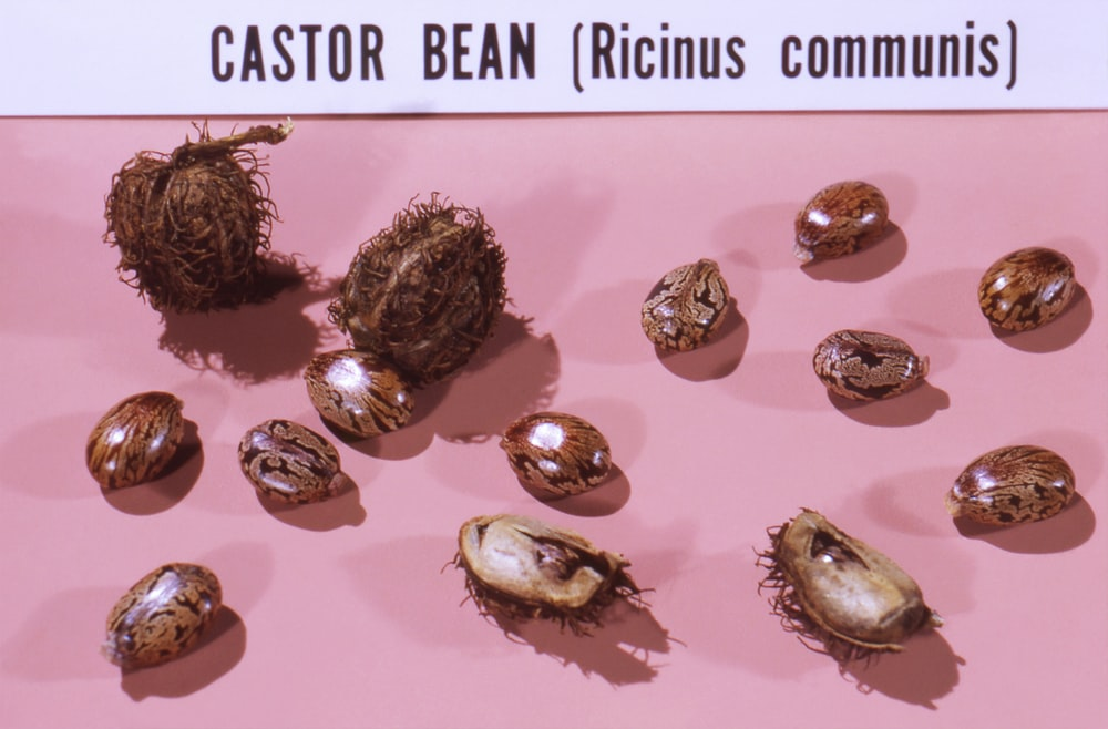 bunch of castor beans on white pink cloth