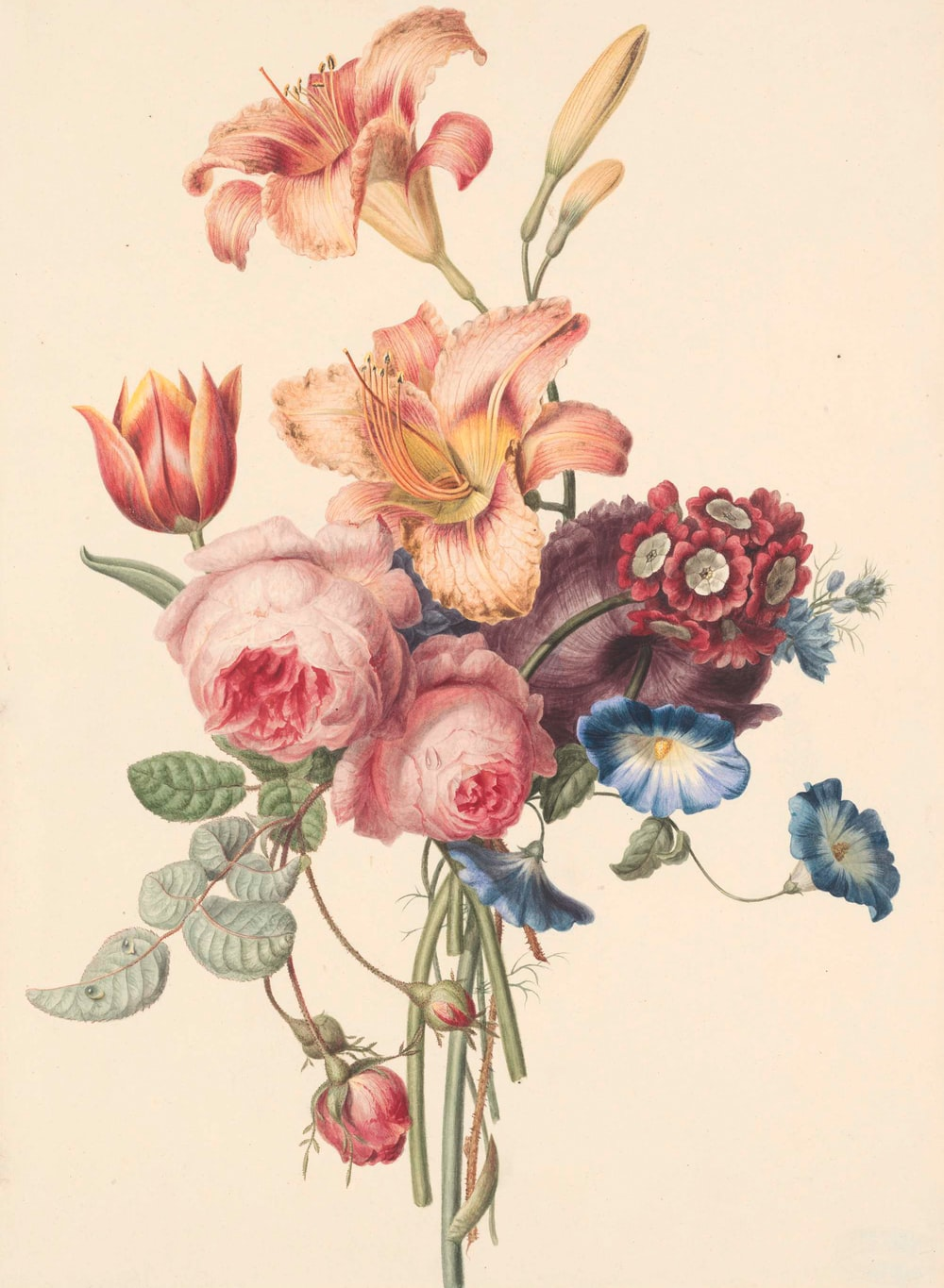 Watercolor Flower Pictures Download Free Images On Unsplash