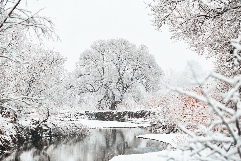 calm water of river in between of bare trees covered by snow