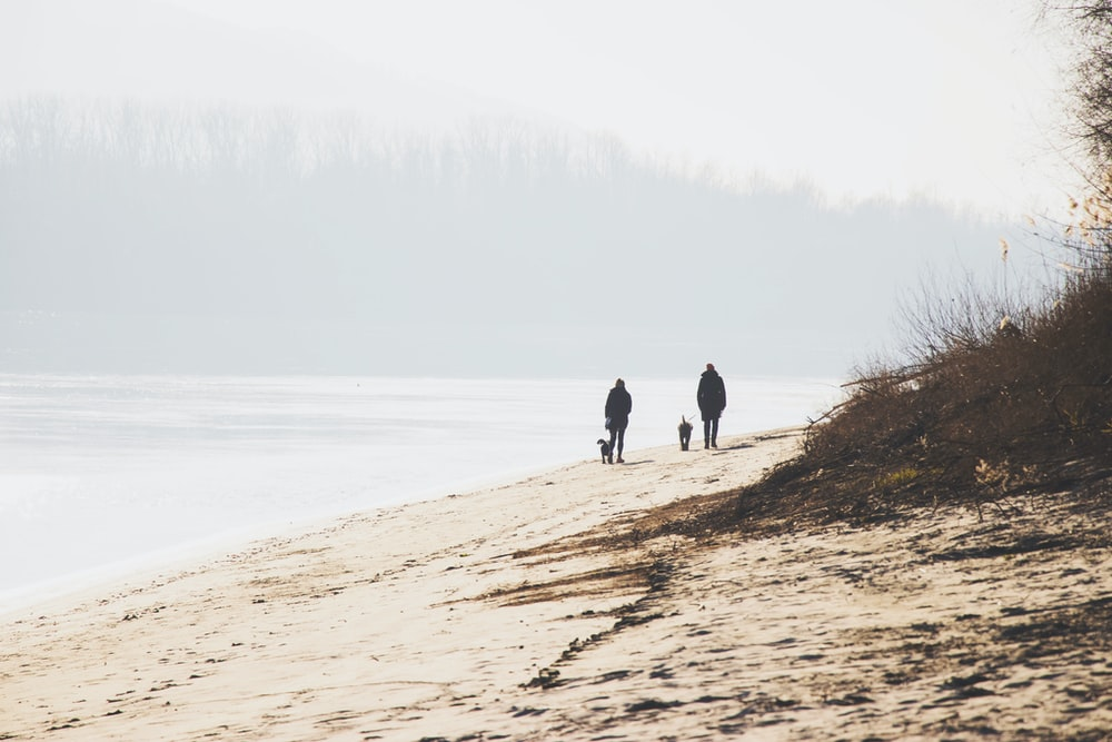 two people holding dog walking on seashore