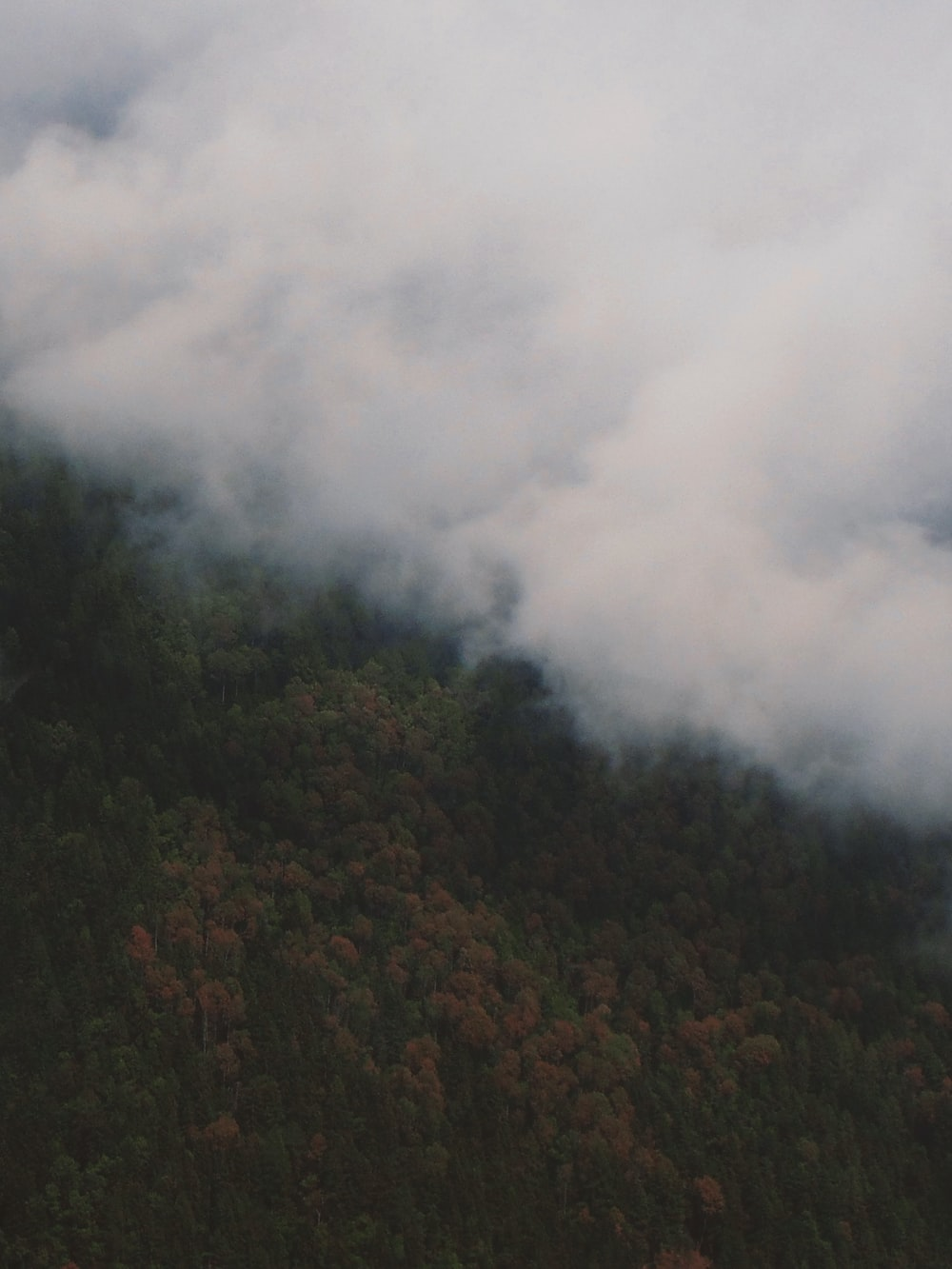 forest and cloud during daytime