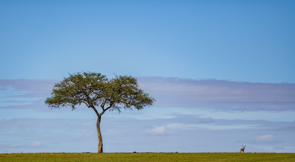 deer near tree on grass field during daytime