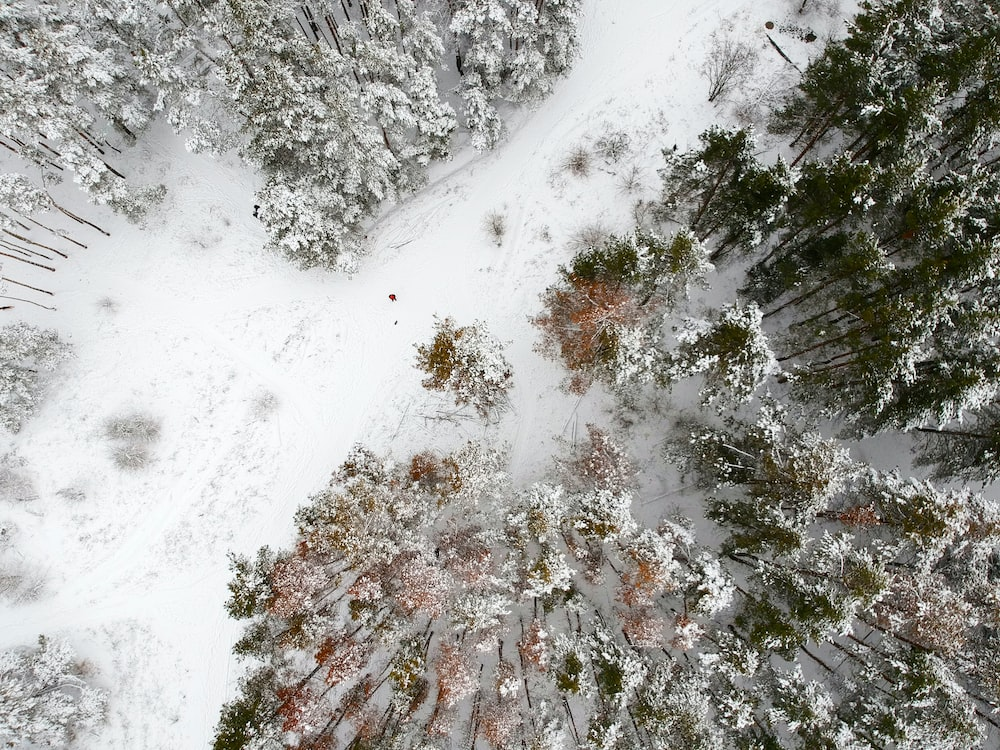 aerial photography of field and trees covered with snow during daytime