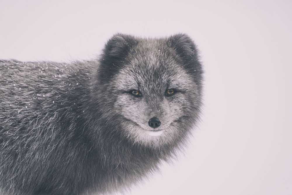 selective-focus photograph of wolf