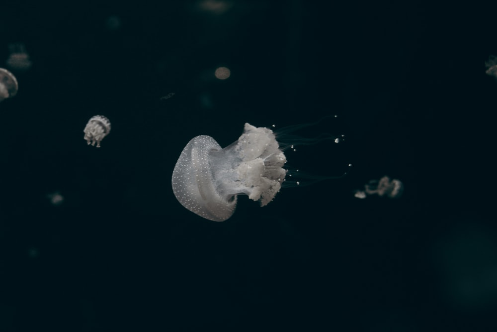 white jelly fish