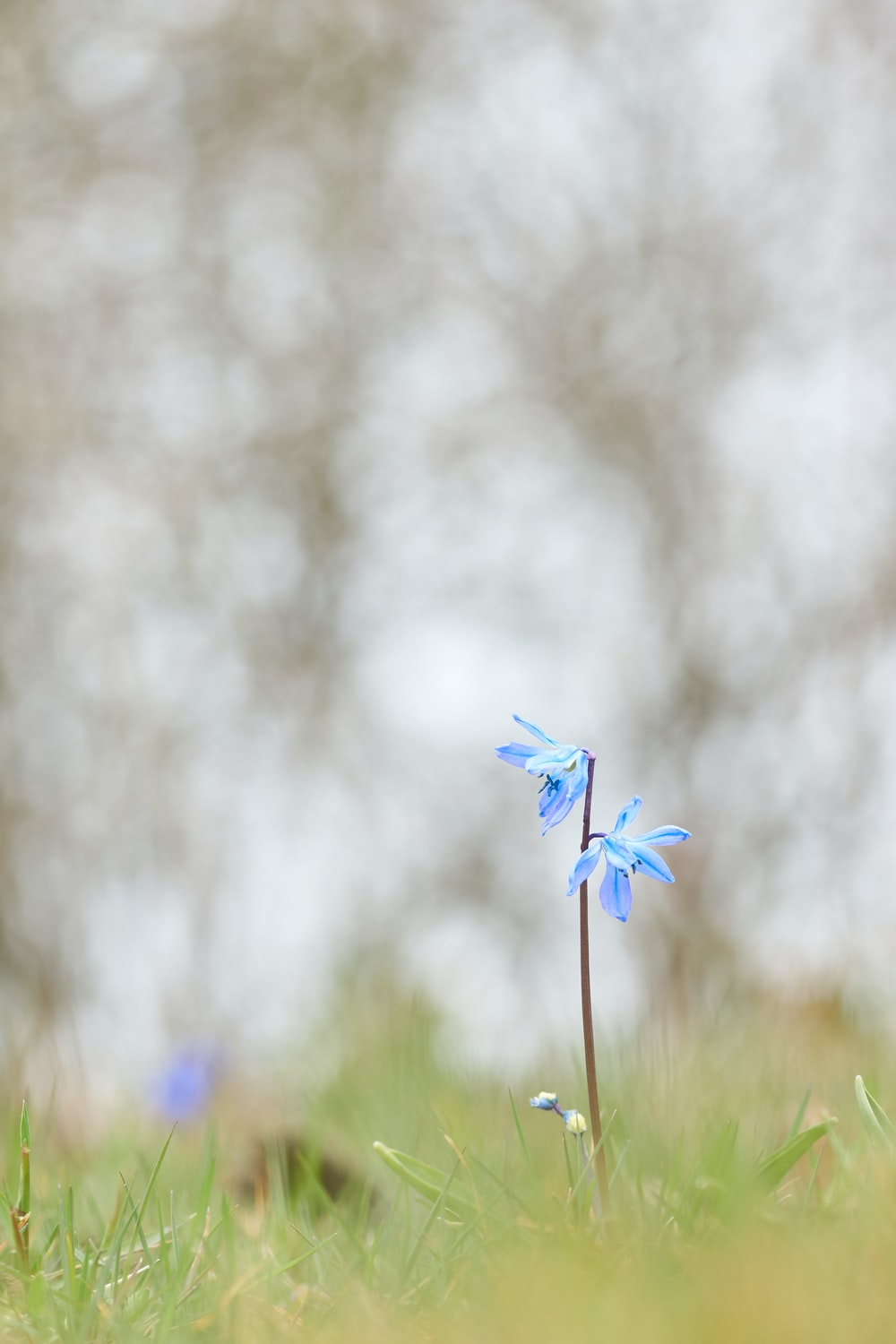 selective focus photography of blue petaled flowers during daytime