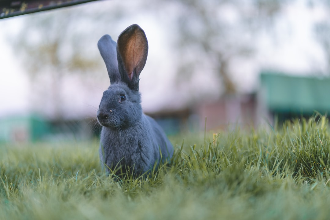 A bunny is listening with his two big ears up