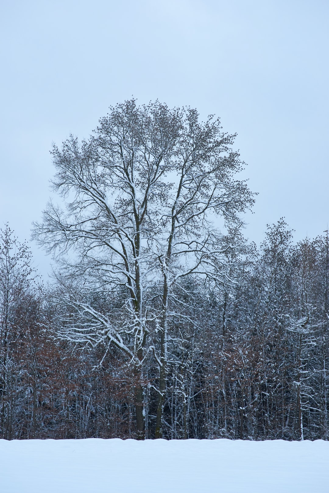 This is not a normal winter tree the dark spots are no leaf it is full of small birds
