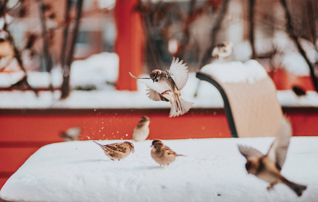 Sparrows On the Snow - All Pictures Edited With My Presets That You Can Find On My Website In Bio - unsplash