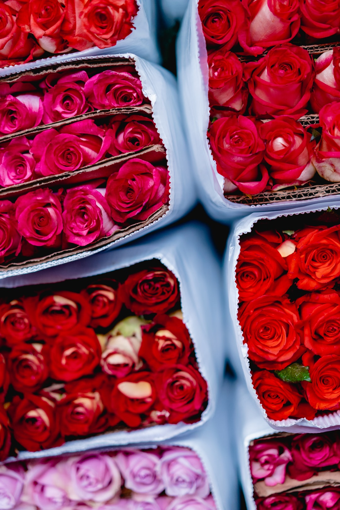 Red roses in boxes