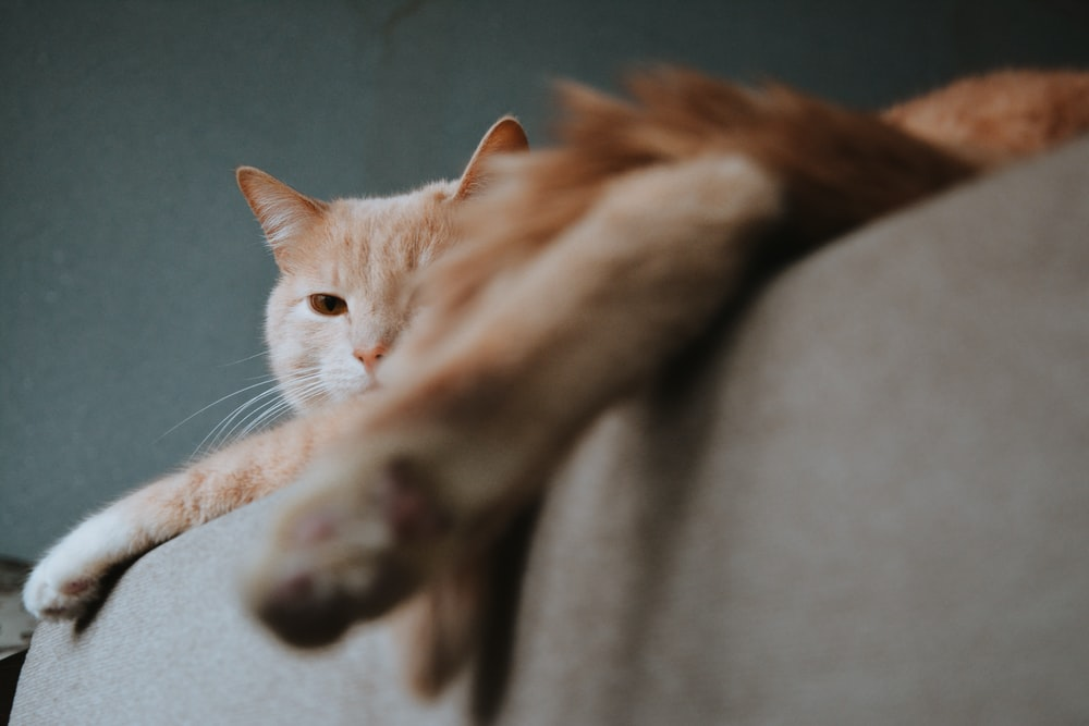orange tabby cat lying on brown sofa
