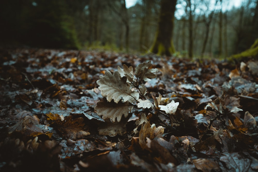 withered leaves between trees