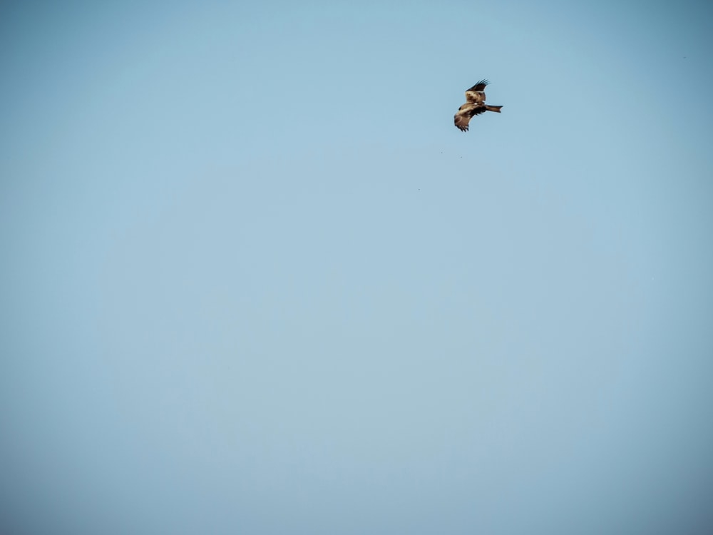 photography of flying bird during daytime