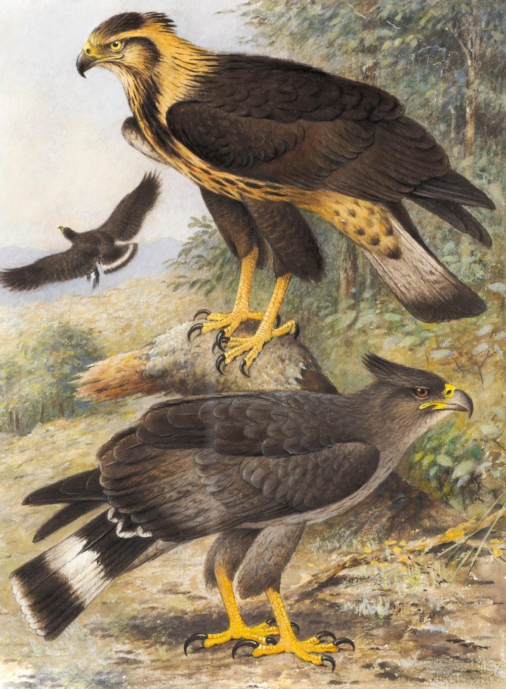 two birds illustration