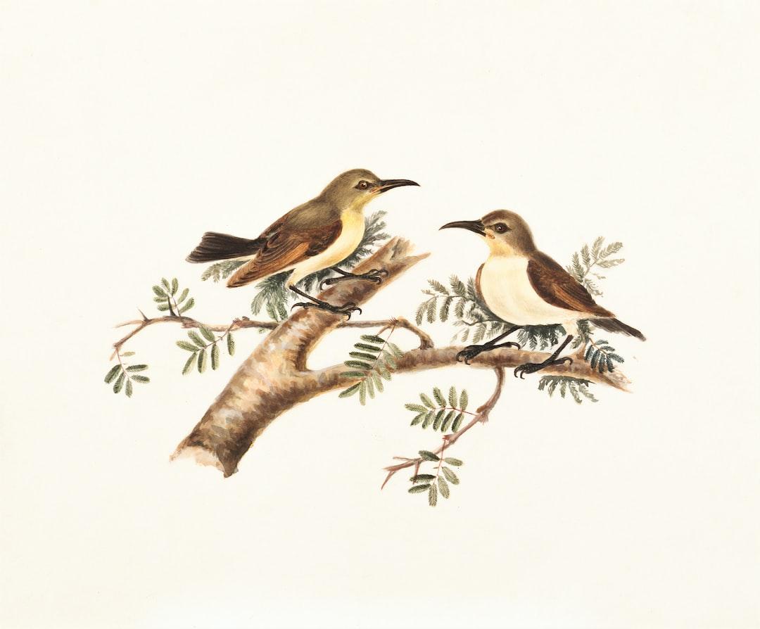 Sunbirds (nectarinia) - unsplash